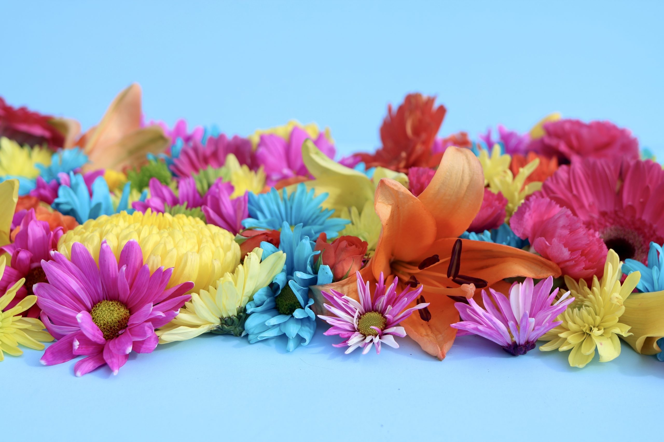 isolation flowers