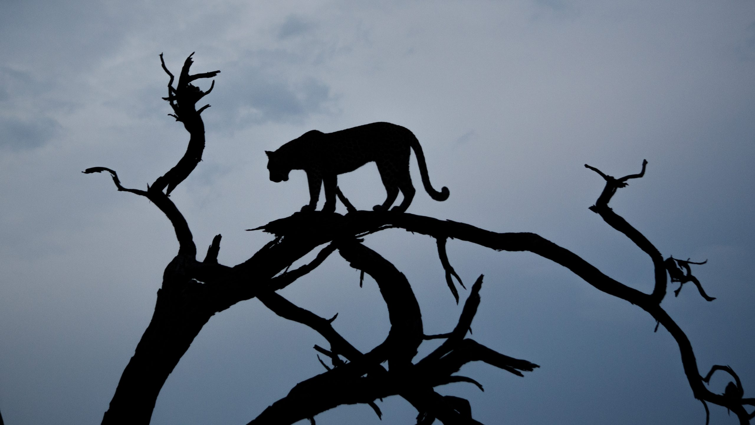branch silhouette