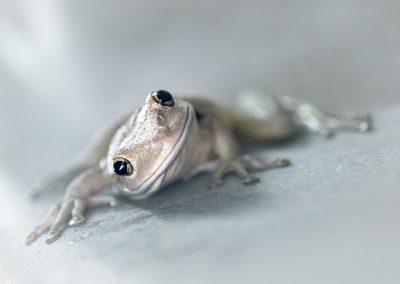 Al Toney - Daisy Frog