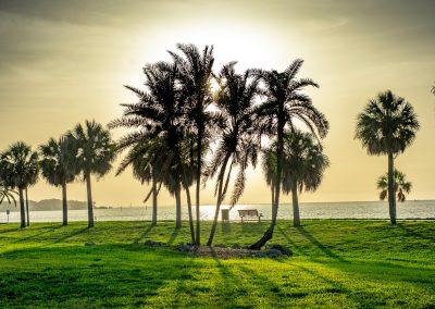 Emitt Lane - Palms in the Park
