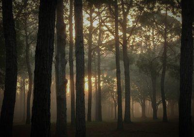 Gregory Colvin - John Chesnut Park Morning
