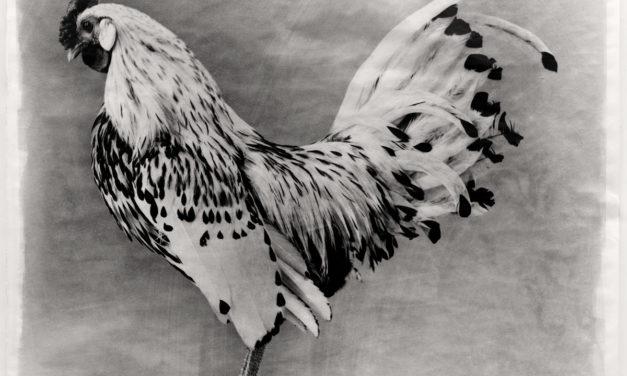 Jean Pagliuso: Poultry, Raptors, Places of Ritual