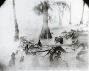 Sally Mann, Landscape